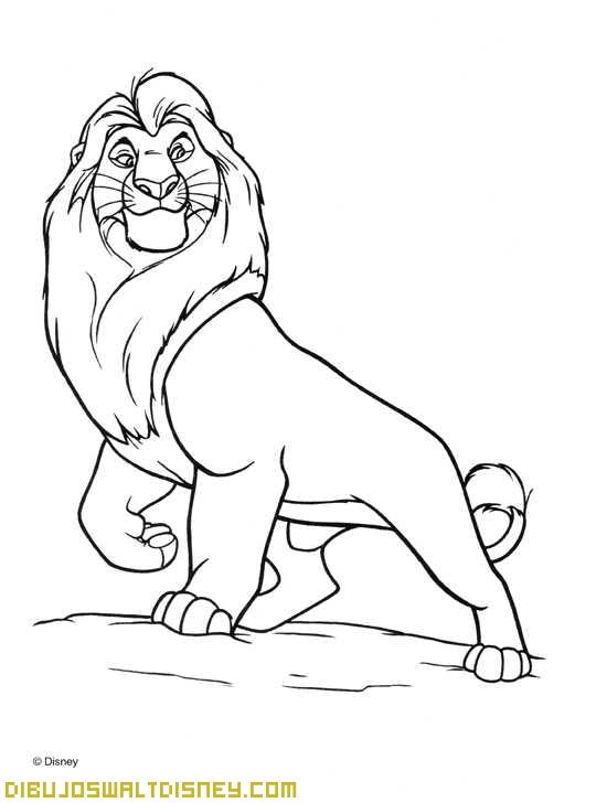 Mirada Del Rey León Dibujos Disney