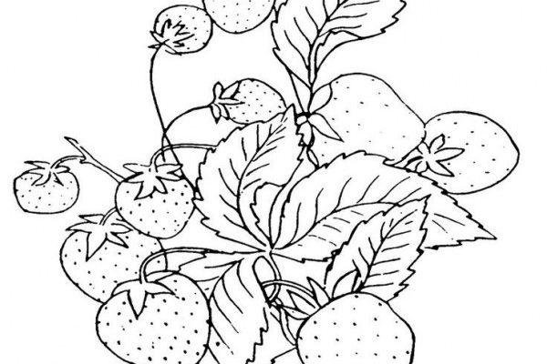 Dibujo ¿Unas fresas para compartir?